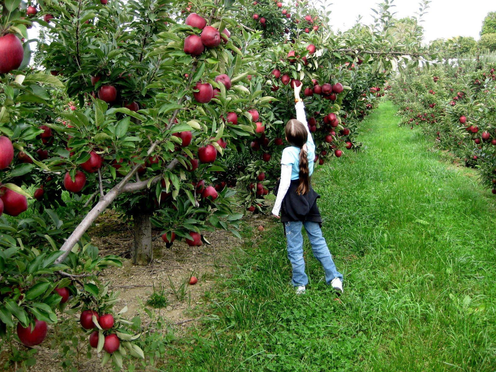 Happy Fall – Celebrating The Season on Long Island