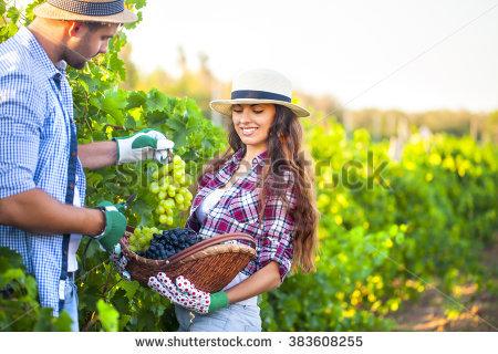 Summer Guide to U-Pick Lewin's Farm!